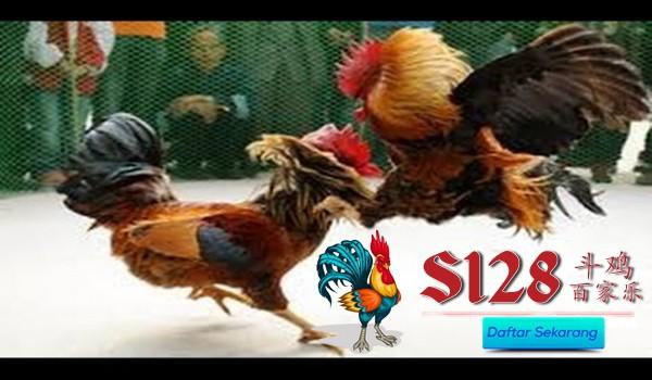 Cara Menemukan Sebuah Situs Sabung Ayam S128 Online